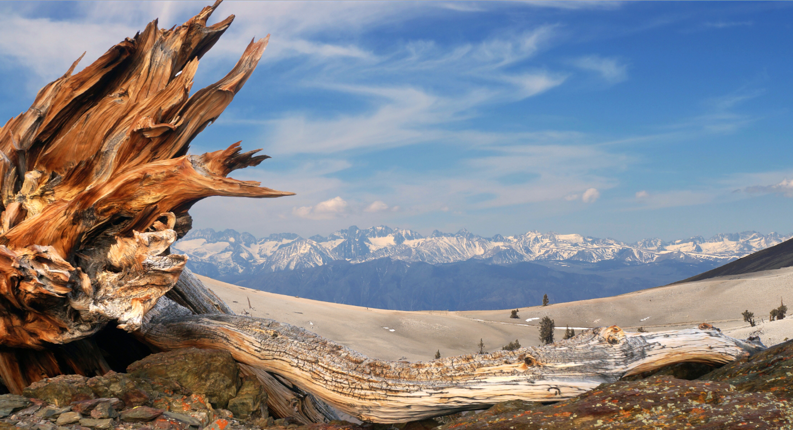 View from a bristlecone forest at the crest of the White Mountains, looking across the Owens Valley to the snow covered Sierra Nevada with the Palisades showing prominently.